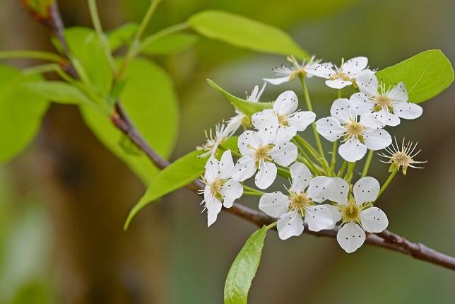 木陰に咲く(1)