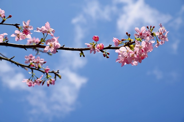 春空に咲く(4)