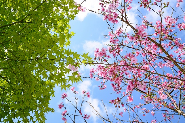 春空に咲く(3)