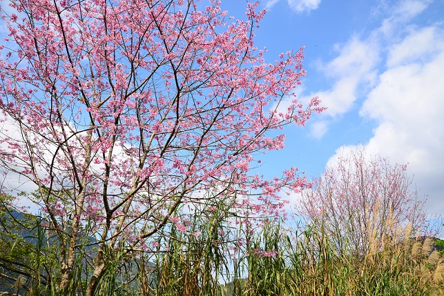 春空に咲く(2)