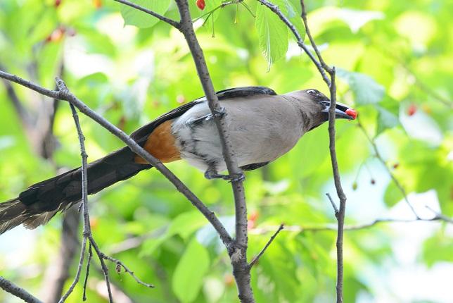 サクランボと野鳥~その他(3)