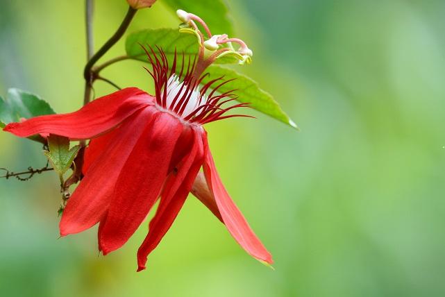 初夏の花々(1)