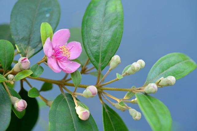 魅惑の花(1)
