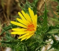 800px-Yellow_flower_with_critters-2[1]