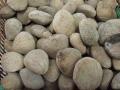 Pangium_edule_seeds[1]