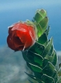 Kogelberg-flora-copyright-Amida-Johns-6[1]