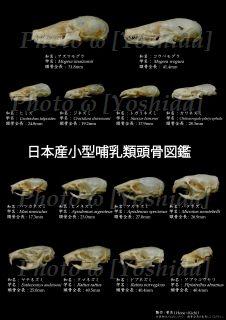 日本産小型哺乳類頭骨表紙_仮完成-01