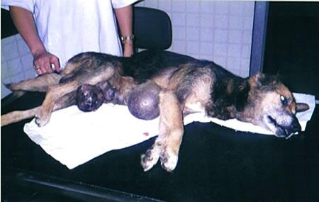 dog-20004.jpg