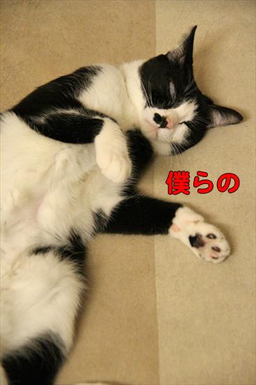 IMG_0385_R僕らの