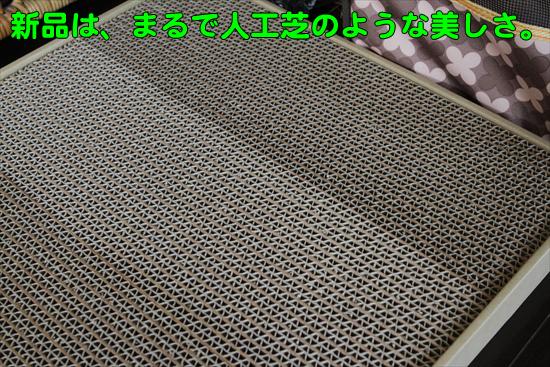 IMG_0296_R新品は、まるで人工芝のような美しさ。