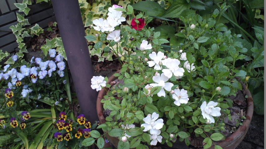 2015春の花③