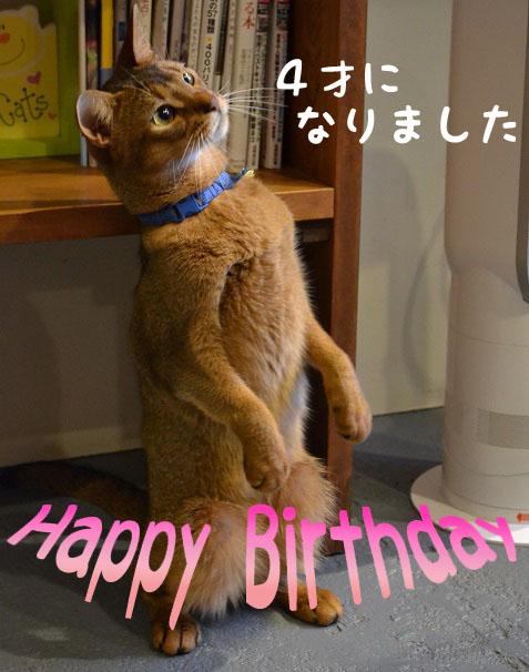 アトム誕生日おめでちょ☆