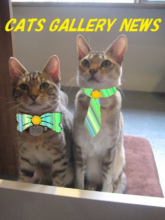Cats Gallery NEWS