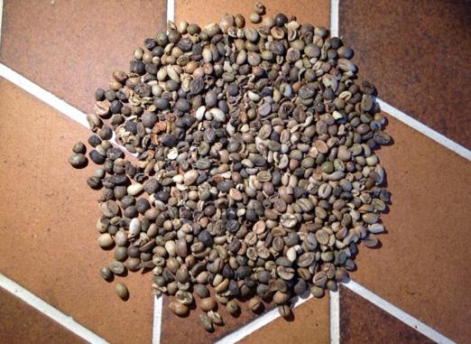 大量の欠点豆