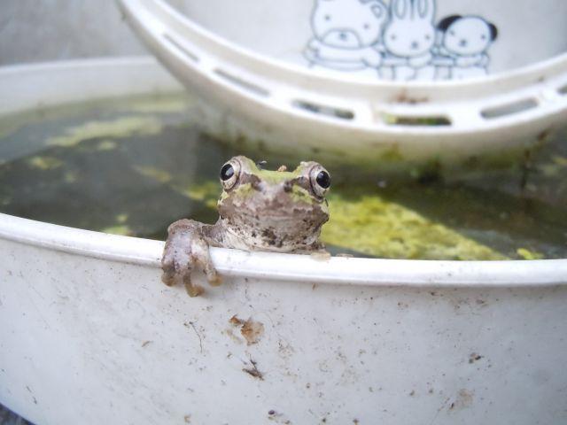 Frog_7287.jpg