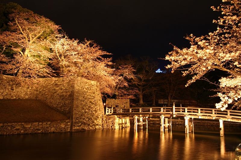 彦根城夜桜