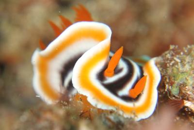 IMG_2208(seaslug).jpg