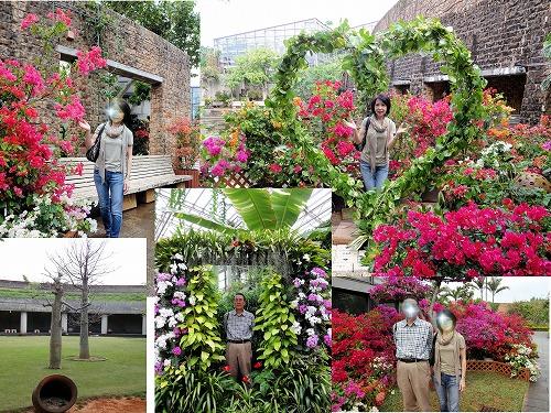 s-熱帯植物園2