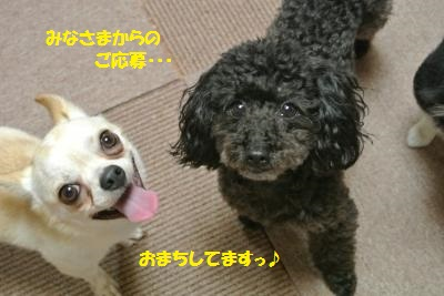 DSC_2470_convert_20150622104552.jpg