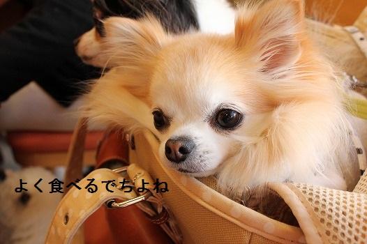 IMG_4914えe