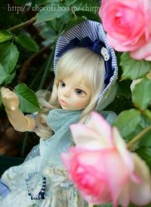 今年も庭のバラと1