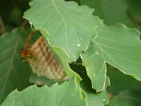 コロギス&ムモンホソアシナガバチ2