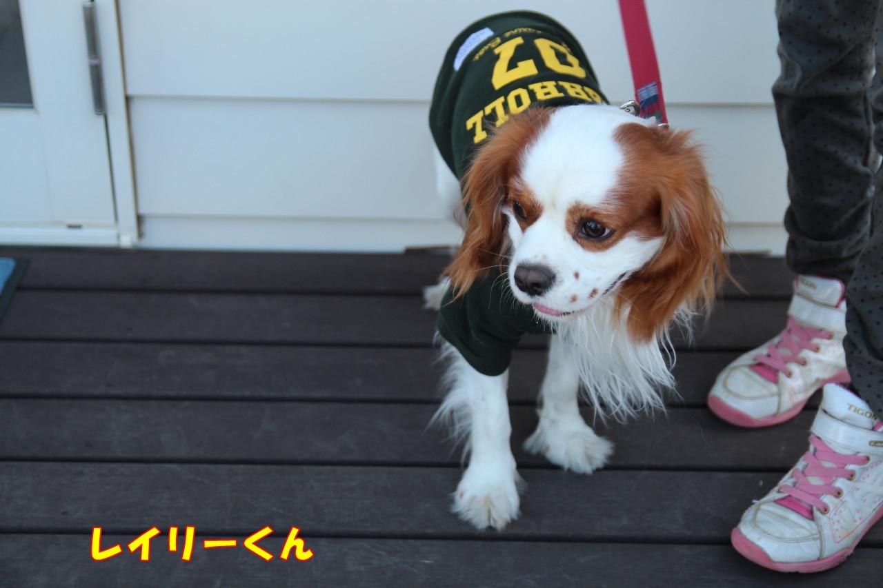 0118お散歩