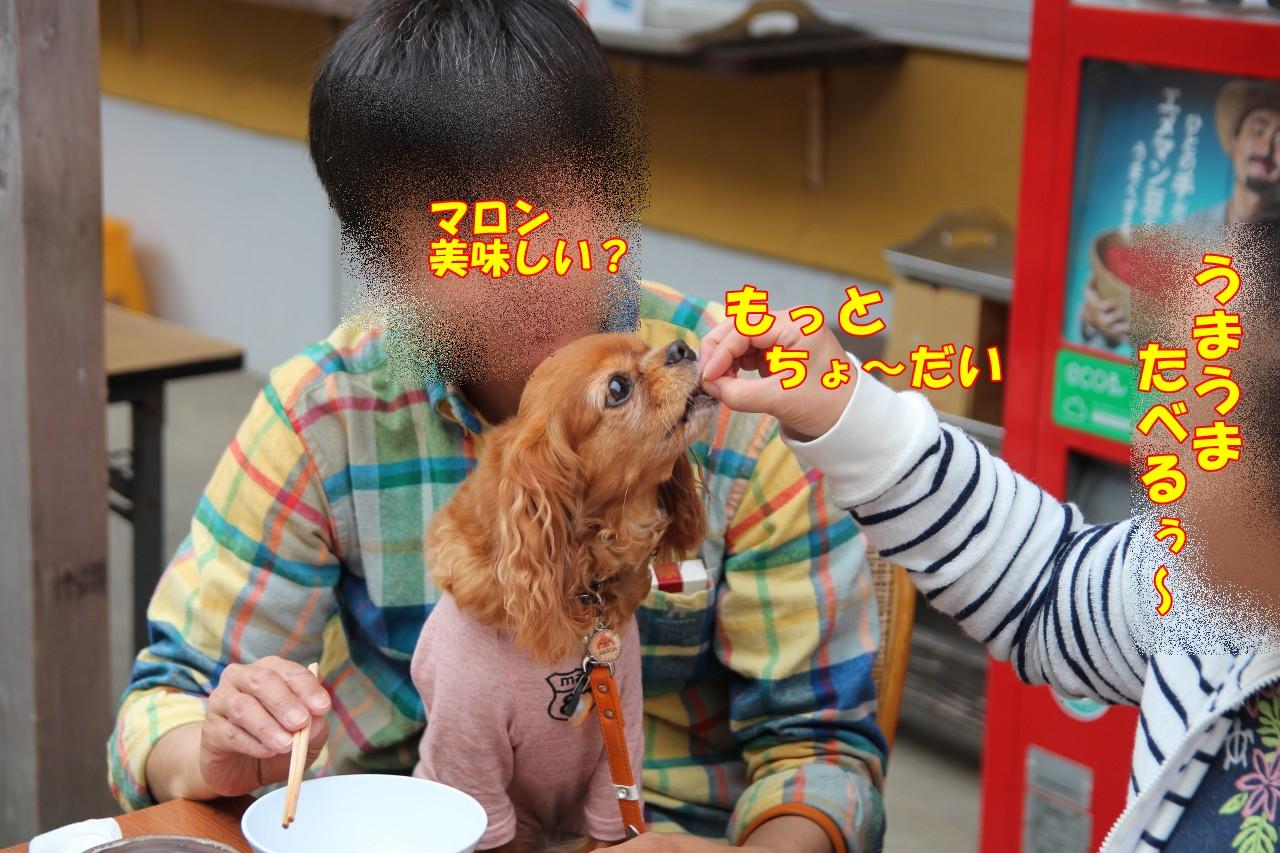 0419城ケ島