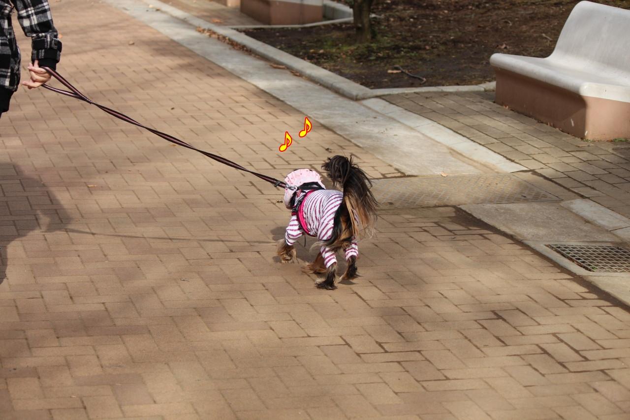 0102お散歩