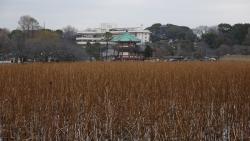 20150207_上野ー東京プラプラ6