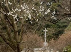 20150315_外人墓地4