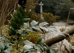 20150315_外人墓地3