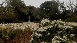 20150315_外人墓地1