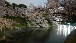 20150402_桜牛ケ淵3