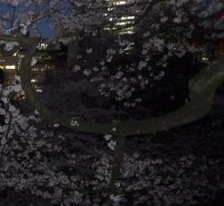 20150402_桜牛ケ淵2