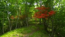 20150523_東山北-大倉10