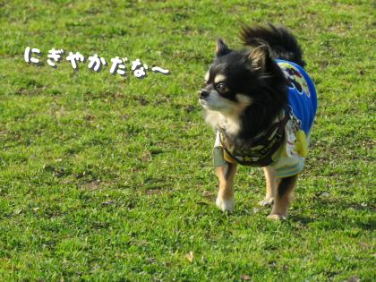 二太2015/03/06-6ーボギーちゃん