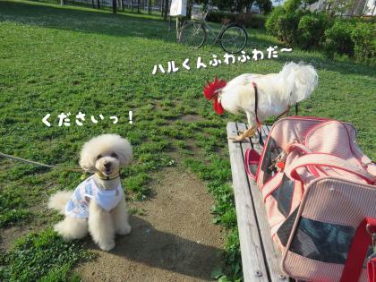 二太2015/05/18-5