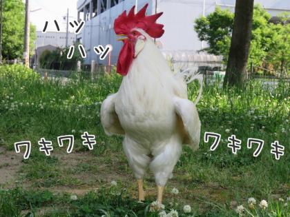 二太2015/05/24-4