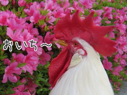 二太2015/05/24-3
