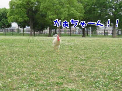 二太2015/06/02-2