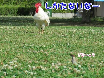 二太2015/06/06-2