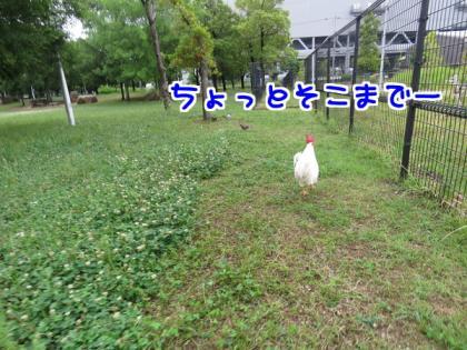 二太2015/06/09-1