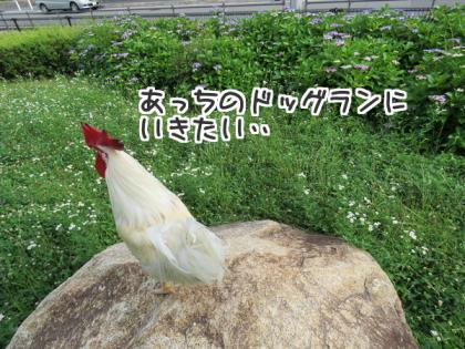 二太2015/056/10-1