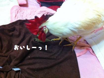 二太2015/01/09-3
