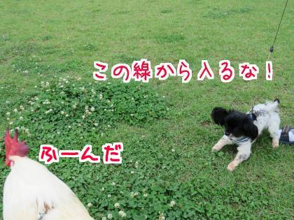 二太2015/06/18-05