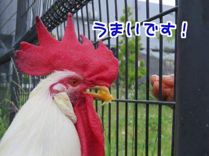 二太2015/06/20-3