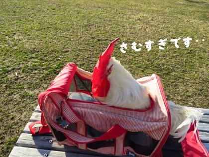 二太2015/01/17-4