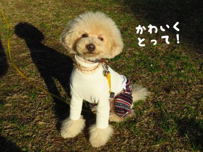 二太君2015/01/18-6 ハルくん