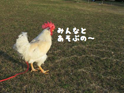 二太2015/01/28-6